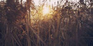 dry farm