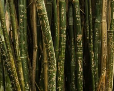 bamboo-production-business-2_opt