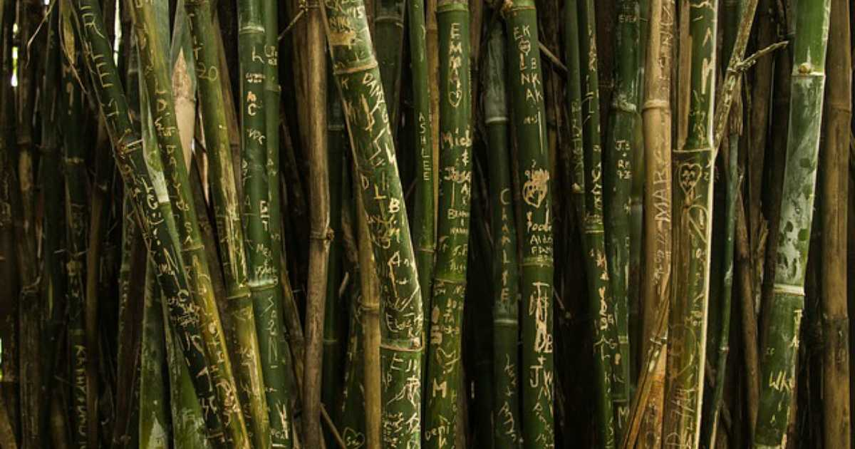 how to start a bamboo production business business news philippines