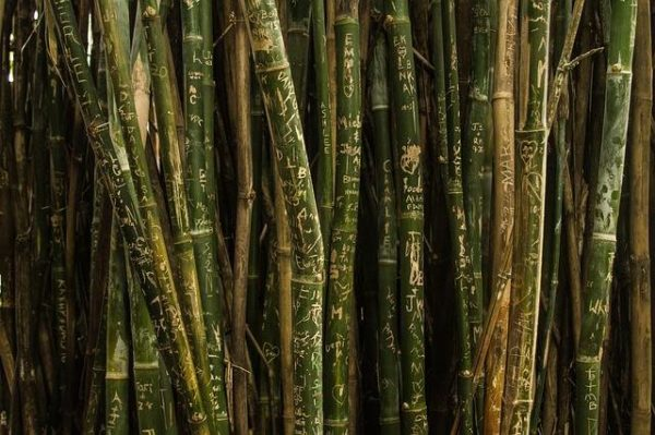 bamboo-production-business