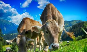 dairy sector