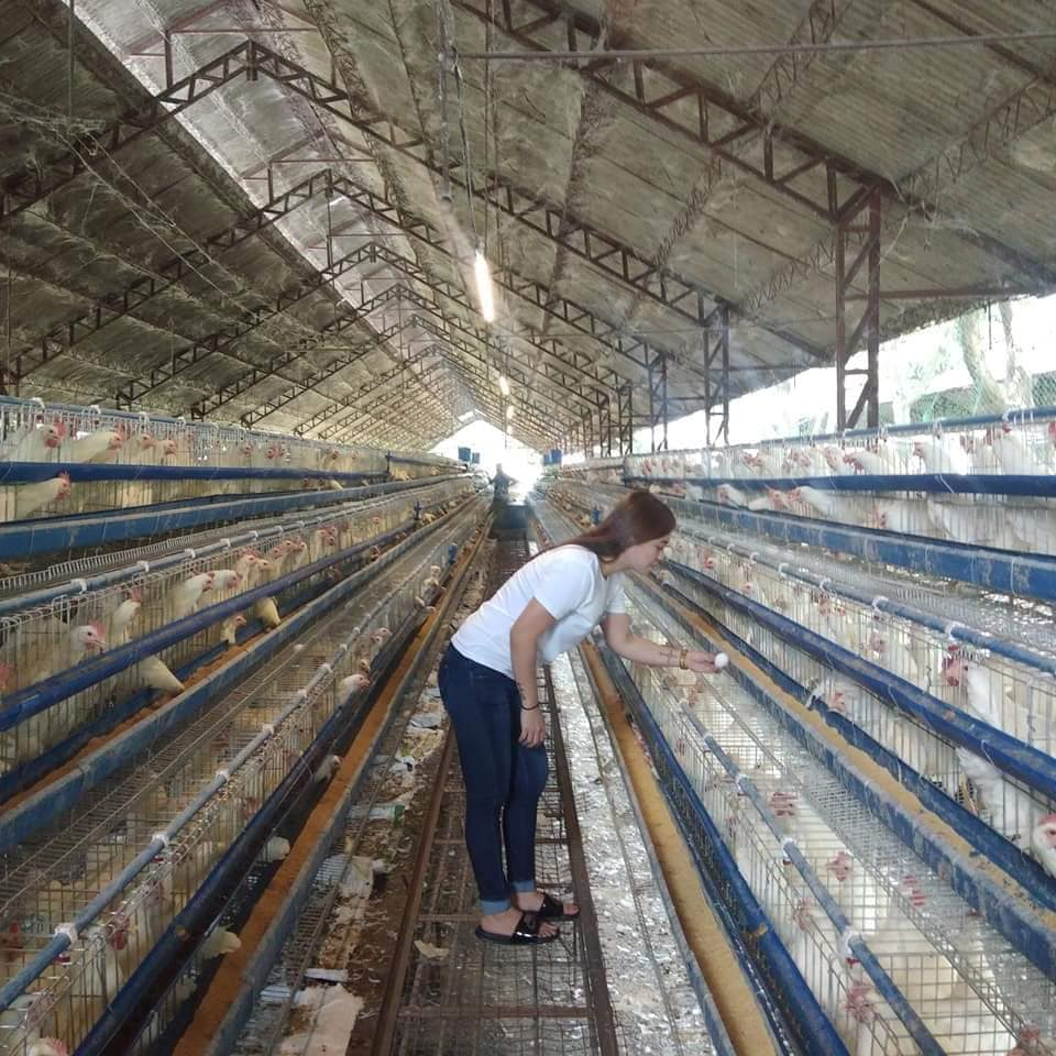 opening a poultry business