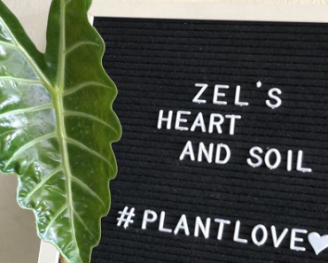 Zel's Heart and Soil