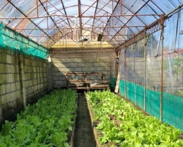 Forever Organic Garden