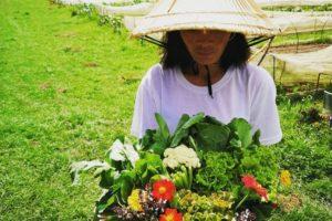 Naomi Natural Farms
